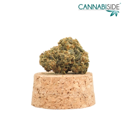 Adventure Infiorescenza Top Senza Semi di Cannabis Legale 1g