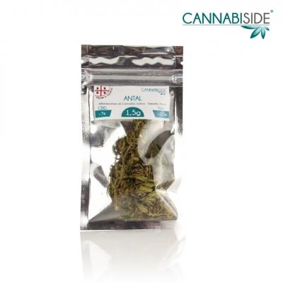 Antal Infiorescenza di Cannabis Legale Economy 1,5 g