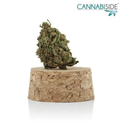 Berry Fruit Infiorescenza Top Senza Semi di Cannabis Legale 1g