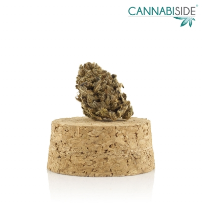Diesel Infiorescenza di Cannabis Legale 1g