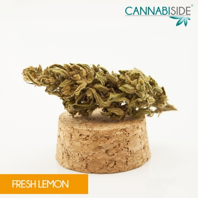 Fresh_Lemon_Infiorescenza_di_Cannabis_Legale_1_g