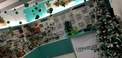 Affiliation of Cannabis Hemp Shop in Franchise from Italy