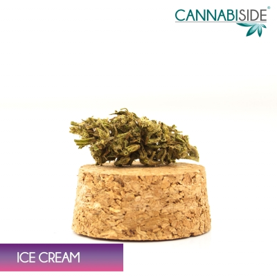 Ice Cream Infiorescenza di Cannabis Legale 1 g