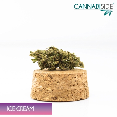 Ice Cream Infiorescenza di Cannabis Legale 1 g