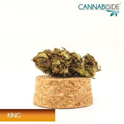 Infiorescenza_di_Cannabis_Sativa_Legale_King_1g
