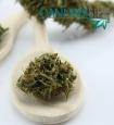Dettaglio Infiorescenza Sensimilla di Cannabis Light (Fiore di canapa sativa senza semi)