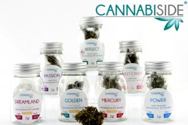 Ingrosso Erba Legale. Fotografia di alcune infiorescenze di cannabis sativa legale al 100 %