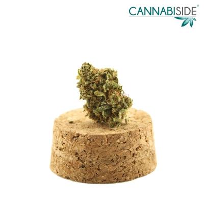 Mercury_Infiorescenza_di_Cannabis_Legale_1_g