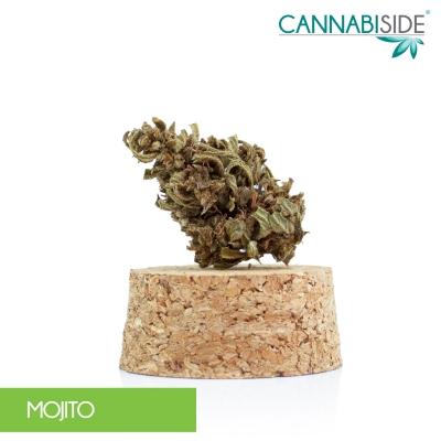 Mojito Infiorescenza di Cannabis Legale 1 g