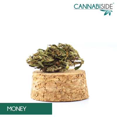 Money Infiorescenza di Cannabis Legale 1 g