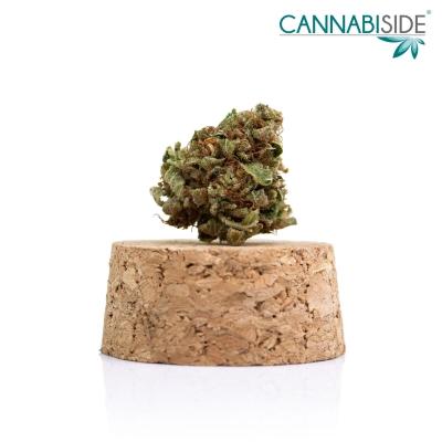 Old Temple Infiorescenza Top Senza Semi di Cannabis Legale 1g