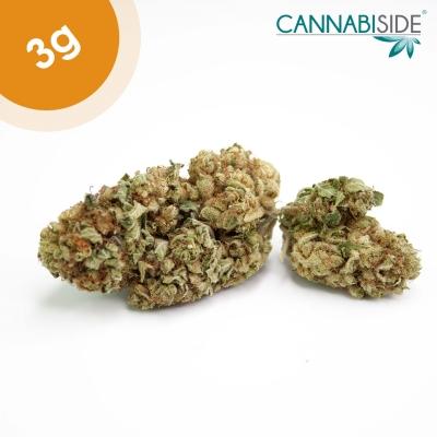 Old Temple Infiorescenza Top Senza Semi di Cannabis Legale 3g