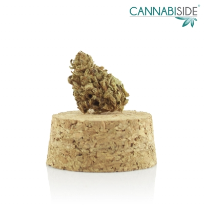 Papel Infiorescenza di Cannabis Legale 1g