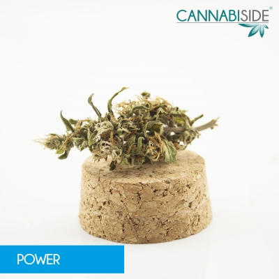 power-infiorescenza-di-cannabis-legale-1-g