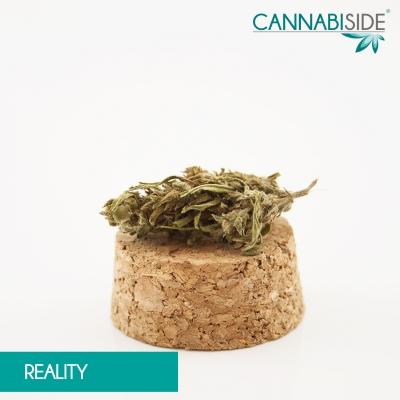 Reality_Infiorescenza_di_Cannabis_Legale_1_g