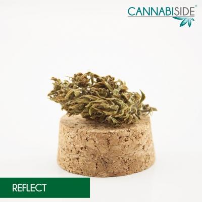 Reflect_Infiorescenza_di_Cannabis_Legale_1_g